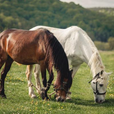 Травосмеси для выпаса лошадей