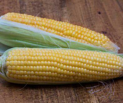 Влагоотдача кукурузы в период созревания